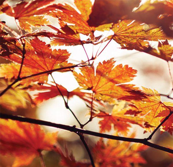 Leaves thumb
